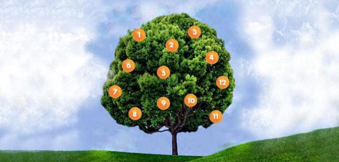 Drvo želja: Zamislite želju, odaberite plod i saznajte šta vas čeka!