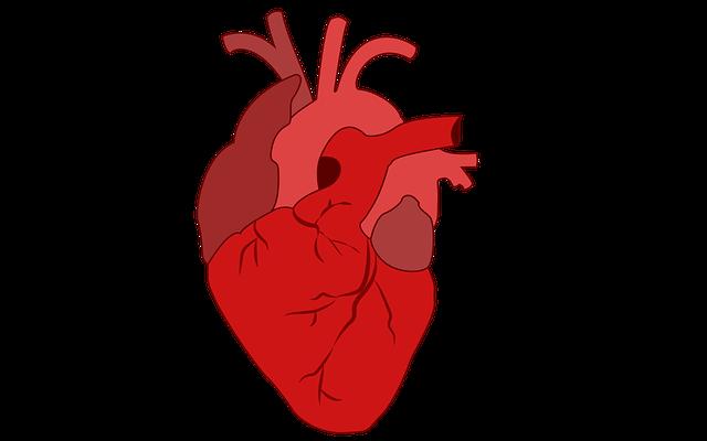 Jedini lijek za zdravo srce i mozak koji stvarno radi: Besplatan, dostupan svima, a još i podmlađuje!