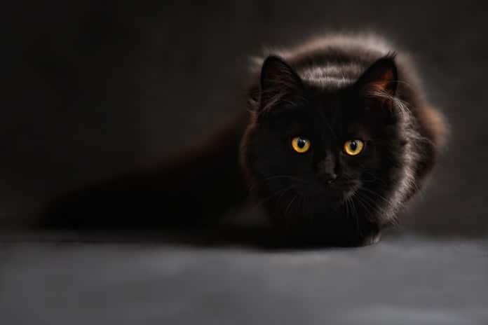 Iscjelitelj i anđeo čuvar – Duboko duhovno značenje posjedovanja mačke i psa