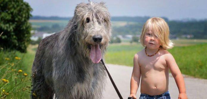 Nevjerojatna mudrost 6-godišnjeg dječaka kojemu je preminuo pas
