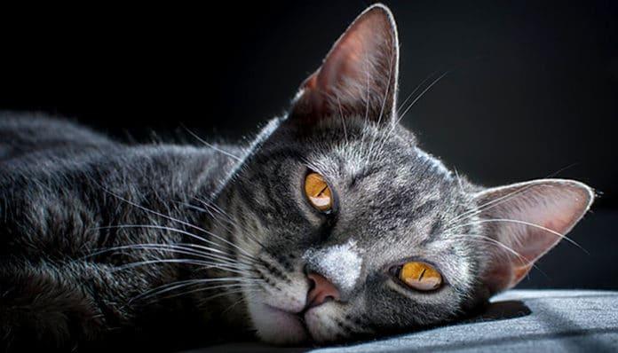 Spiritualne tajne i iscjeljujuće moći mačaka: Mačke vam dolaze s razlogom!