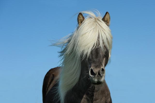 Kad muž i žena postanu otac i majka – oni postanu i konj i kobila