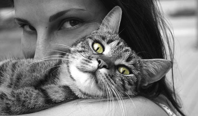 Šta sve liječi mačka kad prede