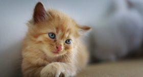 5 razloga zbog kojih nas mačke čine zdravijima