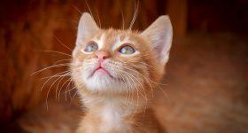 Imate mačku? Imate i 40% manje šansi za srčani udar!
