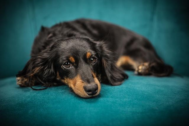 Evo što bi vam rekao vaš pas kada bi mogao govoriti