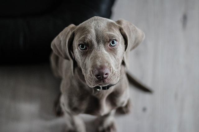 10 činjenica o psima: Ovo je dokaz da ne možemo živjeti bez njih!