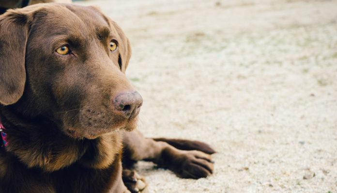 Da, istina je: Psi mogu prepoznati lošu i lažljivu osobu, evo i kako!
