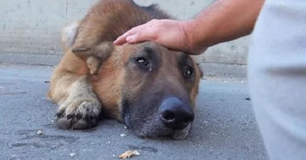 Mladić je pružio ruku psu lutalici, a on je legao i počeo plakati