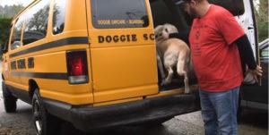 Otvorio je školu za pse i svakog jutra ima pseći školski bus prepun pasa đaka